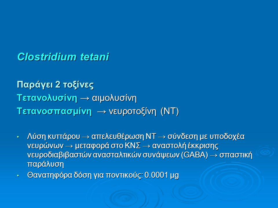 Clostridium tetani Παράγει 2 τοξίνες Τετανολυσίνη → αιμολυσίνη Τετανοσπασμίνη → νευροτοξίνη (NT) Λύση κυττάρου → απελευθέρωση ΝΤ → σύνδεση με υποδοχέα νευρώνων → μεταφορά στο ΚΝΣ → αναστολή έκκρισης νευροδιαβιβαστών ανασταλτικών συνάψεων (GABA) → σπαστική παράλυση Λύση κυττάρου → απελευθέρωση ΝΤ → σύνδεση με υποδοχέα νευρώνων → μεταφορά στο ΚΝΣ → αναστολή έκκρισης νευροδιαβιβαστών ανασταλτικών συνάψεων (GABA) → σπαστική παράλυση Θανατηφόρα δόση για ποντικούς: 0.0001 μg Θανατηφόρα δόση για ποντικούς: 0.0001 μg