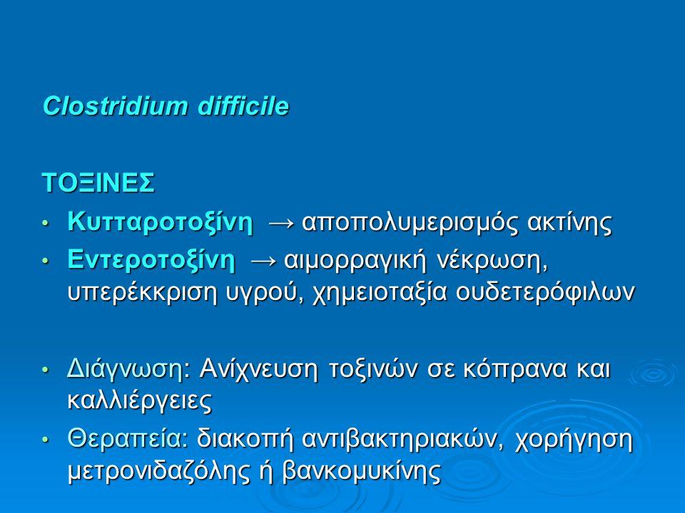 Clostridium difficile ΤΟΞΙΝΕΣ Κυτταροτοξίνη → αποπολυμερισμός ακτίνης Κυτταροτοξίνη → αποπολυμερισμός ακτίνης Εντεροτοξίνη → αιμορραγική νέκρωση, υπερέκκριση υγρού, χημειοταξία ουδετερόφιλων Εντεροτοξίνη → αιμορραγική νέκρωση, υπερέκκριση υγρού, χημειοταξία ουδετερόφιλων Διάγνωση: Ανίχνευση τοξινών σε κόπρανα και καλλιέργειες Διάγνωση: Ανίχνευση τοξινών σε κόπρανα και καλλιέργειες Θεραπεία: διακοπή αντιβακτηριακών, χορήγηση μετρονιδαζόλης ή βανκομυκίνης Θεραπεία: διακοπή αντιβακτηριακών, χορήγηση μετρονιδαζόλης ή βανκομυκίνης
