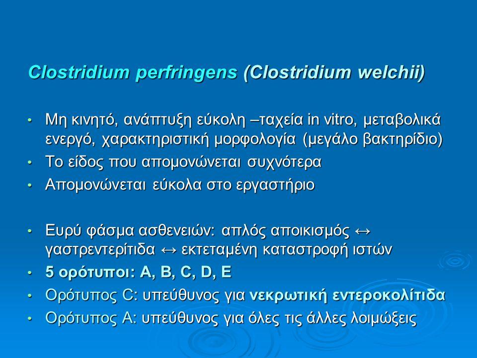 Clostridium perfringens (Clostridium welchii) Μη κινητό, ανάπτυξη εύκολη –ταχεία in vitro, μεταβολικά ενεργό, χαρακτηριστική μορφολογία (μεγάλο βακτηρίδιο) Μη κινητό, ανάπτυξη εύκολη –ταχεία in vitro, μεταβολικά ενεργό, χαρακτηριστική μορφολογία (μεγάλο βακτηρίδιο) Το είδος που απομονώνεται συχνότερα Το είδος που απομονώνεται συχνότερα Απομονώνεται εύκολα στο εργαστήριο Απομονώνεται εύκολα στο εργαστήριο Ευρύ φάσμα ασθενειών: απλός αποικισμός ↔ γαστρεντερίτιδα ↔ εκτεταμένη καταστροφή ιστών Ευρύ φάσμα ασθενειών: απλός αποικισμός ↔ γαστρεντερίτιδα ↔ εκτεταμένη καταστροφή ιστών 5 ορότυποι: A, B, C, D, E 5 ορότυποι: A, B, C, D, E Ορότυπος C: υπεύθυνος για νεκρωτική εντεροκολίτιδα Ορότυπος C: υπεύθυνος για νεκρωτική εντεροκολίτιδα Ορότυπος A: υπεύθυνος για όλες τις άλλες λοιμώξεις Ορότυπος A: υπεύθυνος για όλες τις άλλες λοιμώξεις