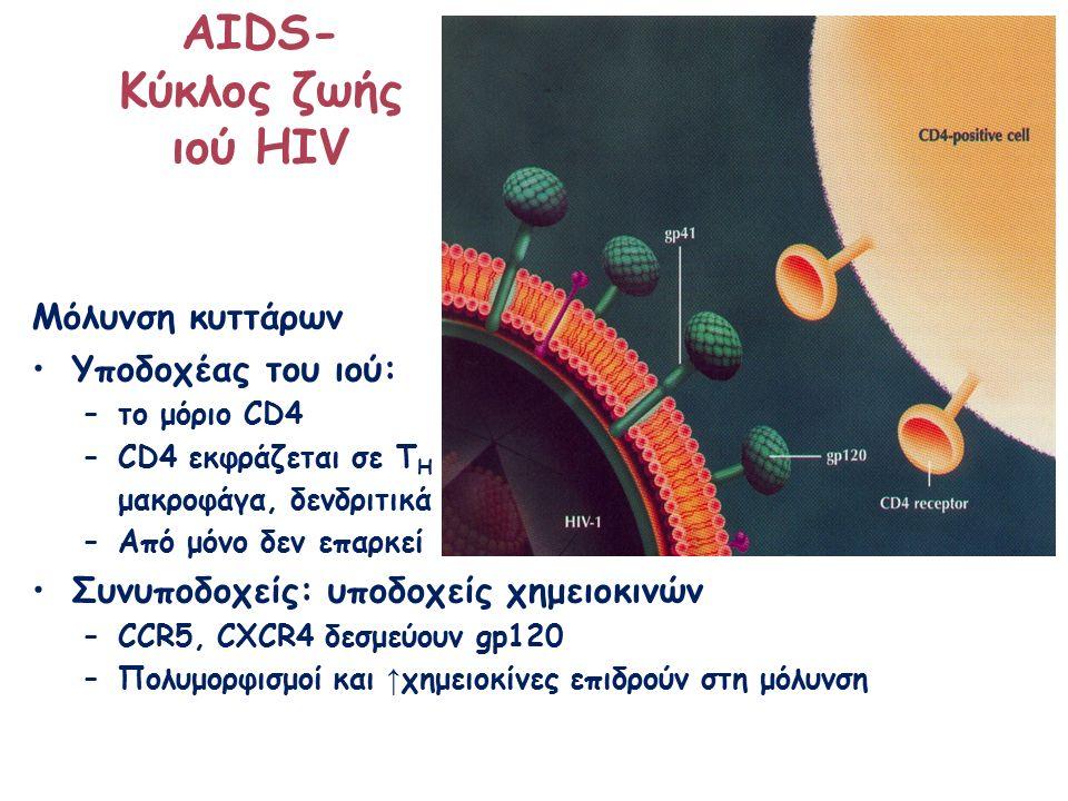 ΑΙDS- Κύκλος ζωής ιού HIV Μόλυνση κυττάρων Υποδοχέας του ιού: –το μόριο CD4 –CD4 εκφράζεται σε Τ H μακροφάγα, δενδριτικά –Από μόνο δεν επαρκεί Συνυποδοχείς: υποδοχείς χημειοκινών –CCR5, CXCR4 δεσμεύουν gp120 –Πολυμορφισμοί και ↑ χημειοκίνες επιδρούν στη μόλυνση