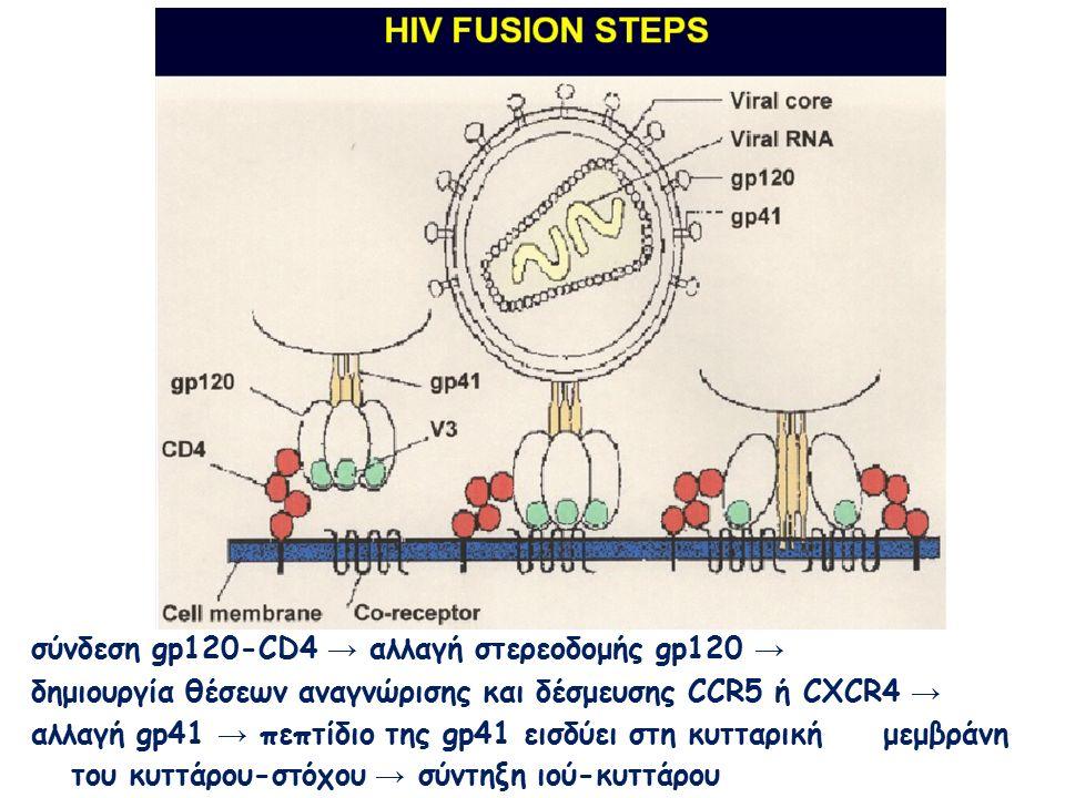 σύνδεση gp120-CD4 → αλλαγή στερεοδομής gp120 → δημιουργία θέσεων αναγνώρισης και δέσμευσης CCR5 ή CXCR4 → αλλαγή gp41 → πεπτίδιο της gp41 εισδύει στη κυτταρικήμεμβράνη του κυττάρου-στόχου → σύντηξη ιού-κυττάρου