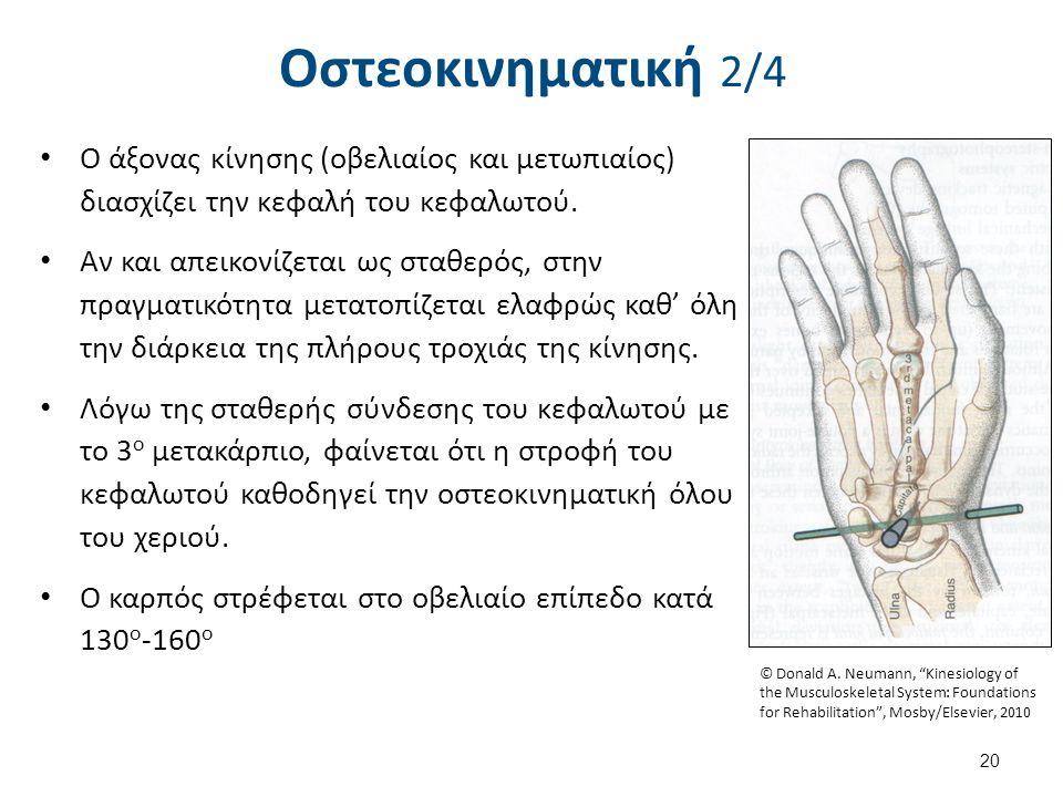 Οστεοκινηματική 2/4 Ο άξονας κίνησης (οβελιαίος και μετωπιαίος) διασχίζει την κεφαλή του κεφαλωτού. Αν και απεικονίζεται ως σταθερός, στην πραγματικότ