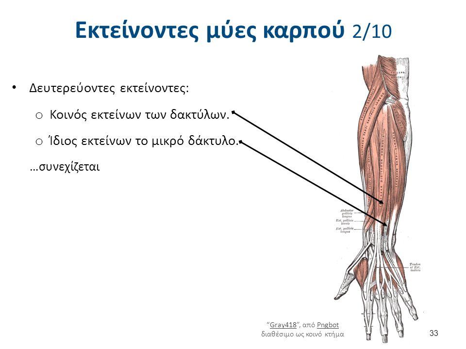 """Εκτείνοντες μύες καρπού 2/10 Δευτερεύοντες εκτείνοντες: o Κοινός εκτείνων των δακτύλων. o Ίδιος εκτείνων το μικρό δάκτυλο. …συνεχίζεται 33 """"Gray418"""","""