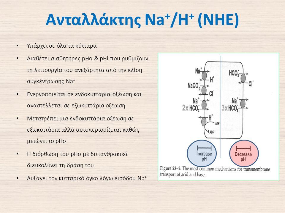 Ανταλλάκτης Na + /H + (NHE) Υπάρχει σε όλα τα κύτταρα Διαθέτει αισθητήρες pHo & pHi που ρυθμίζουν τη λειτουργία του ανεξάρτητα από την κλίση συγκέντρωσης Na + Ενεργοποιείται σε ενδοκυττάρια οξέωση και αναστέλλεται σε εξωκυττάρια οξέωση Μετατρέπει μια ενδοκυττάρια οξέωση σε εξωκυττάρια αλλά αυτοπεριορίζεται καθώς μειώνει το pHo Η διόρθωση του pHo με διττανθρακικά διευκολύνει τη δράση του Αυξάνει τον κυτταρικό όγκο λόγω εισόδου Na +