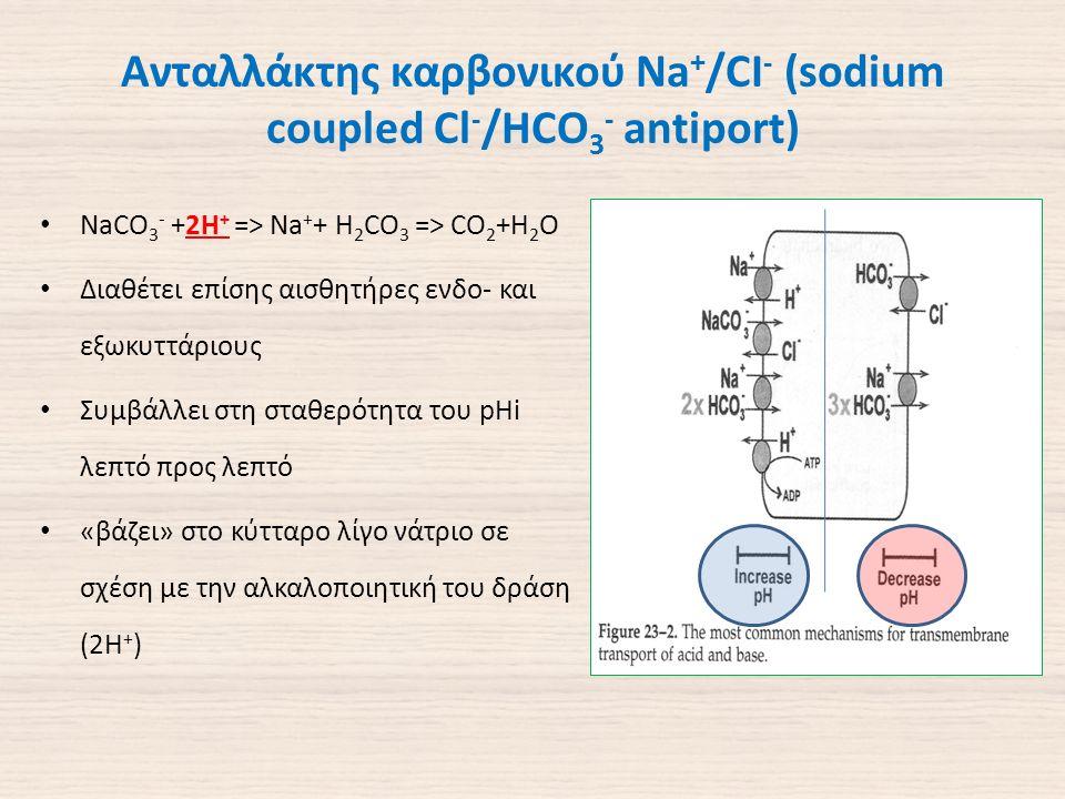 Ανταλλάκτης καρβονικού Na + /CI - (sodium coupled Cl - /HCO 3 - antiport) NaCO 3 - +2H + => Na + + H 2 CO 3 => CO 2 +H 2 O Διαθέτει επίσης αισθητήρες ενδο- και εξωκυττάριους Συμβάλλει στη σταθερότητα του pHi λεπτό προς λεπτό «βάζει» στο κύτταρο λίγο νάτριο σε σχέση με την αλκαλοποιητική του δράση (2Η + )