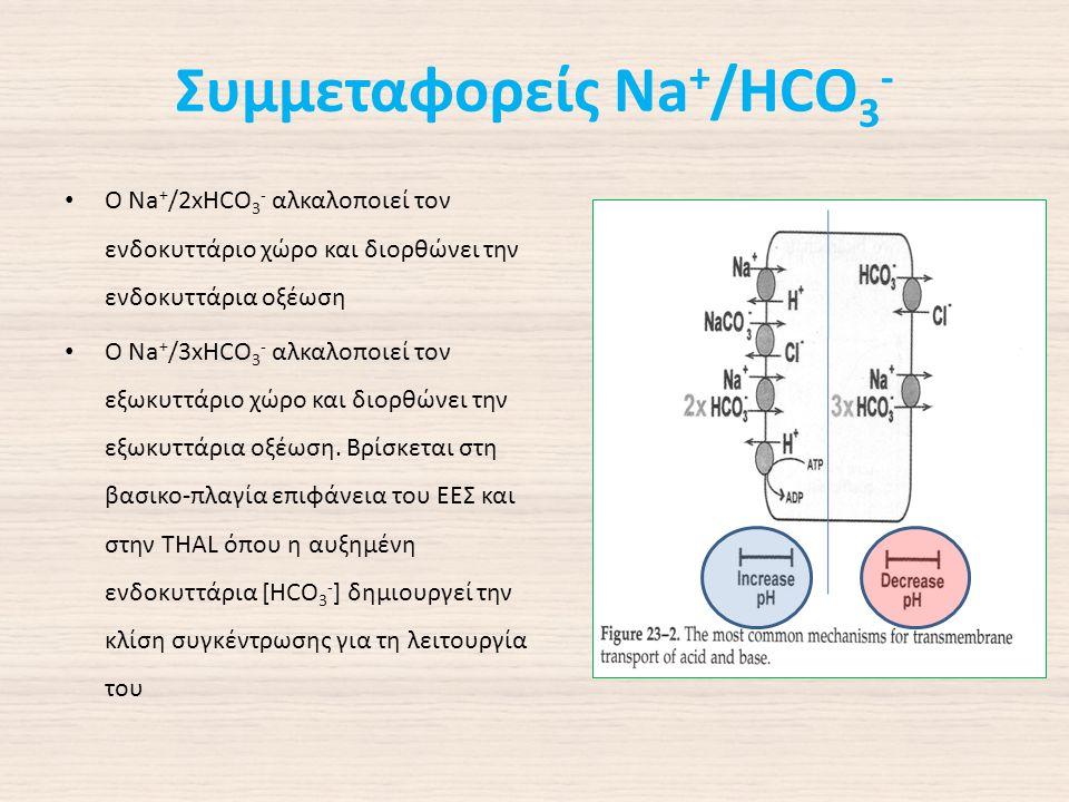 Συμμεταφορείς Na + /HCO 3 - Ο Na + /2xHCO 3 - αλκαλοποιεί τον ενδοκυττάριο χώρο και διορθώνει την ενδοκυττάρια οξέωση Ο Na + /3xHCO 3 - αλκαλοποιεί τον εξωκυττάριο χώρο και διορθώνει την εξωκυττάρια οξέωση.