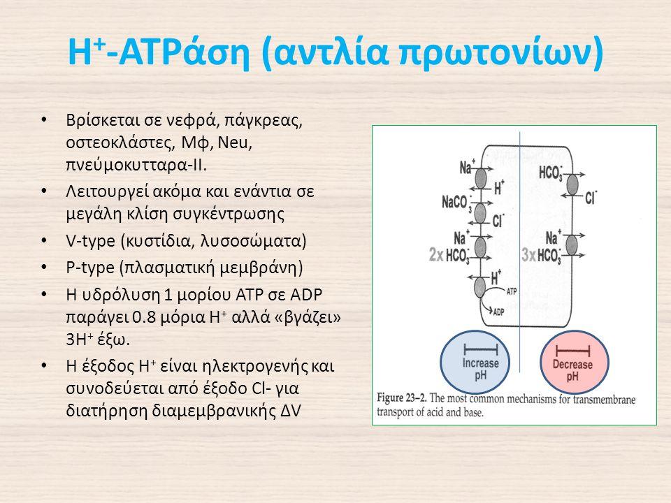 Η + -ΑΤΡάση (αντλία πρωτονίων) Βρίσκεται σε νεφρά, πάγκρεας, οστεοκλάστες, Μφ, Neu, πνεύμοκυτταρα-ΙΙ.