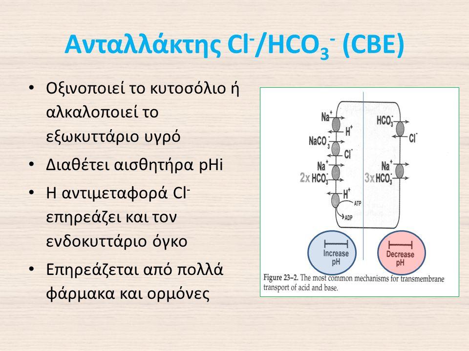 Ανταλλάκτης Cl - /HCO 3 - (CBE) Οξινοποιεί το κυτοσόλιο ή αλκαλοποιεί το εξωκυττάριο υγρό Διαθέτει αισθητήρα pHi Η αντιμεταφορά Cl - επηρεάζει και τον ενδοκυττάριο όγκο Επηρεάζεται από πολλά φάρμακα και ορμόνες