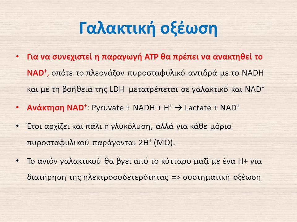 Γαλακτική οξέωση Για να συνεχιστεί η παραγωγή ΑΤΡ θα πρέπει να ανακτηθεί το NAD +, οπότε το πλεονάζον πυροσταφυλικό αντιδρά με το NADH και με τη βοήθεια της LDH μετατρέπεται σε γαλακτικό και NAD + Ανάκτηση NAD + : Pyruvate + NADH + H + → Lactate + NAD + Έτσι αρχίζει και πάλι η γλυκόλυση, αλλά για κάθε μόριο πυροσταφυλικού παράγονται 2Η + (ΜΟ).