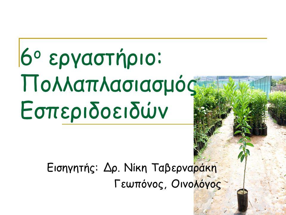 6 ο εργαστήριο: Πολλαπλασιασμός Εσπεριδοειδών Εισηγητής: Δρ. Νίκη Ταβερναράκη Γεωπόνος, Οινολόγος