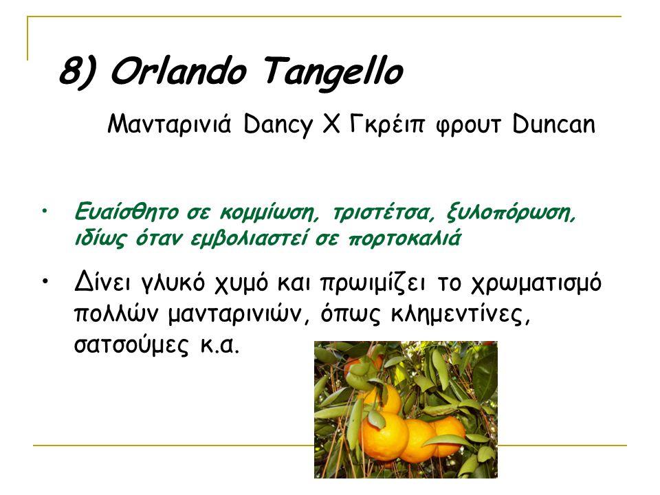 8) Οrlando Tangello Μανταρινιά Dancy Χ Γκρέιπ φρουτ Duncan Ευαίσθητο σε κομμίωση, τριστέτσα, ξυλοπόρωση, ιδίως όταν εμβολιαστεί σε πορτοκαλιά Δίνει γλυκό χυμό και πρωιμίζει το χρωματισμό πολλών μανταρινιών, όπως κλημεντίνες, σατσούμες κ.α.