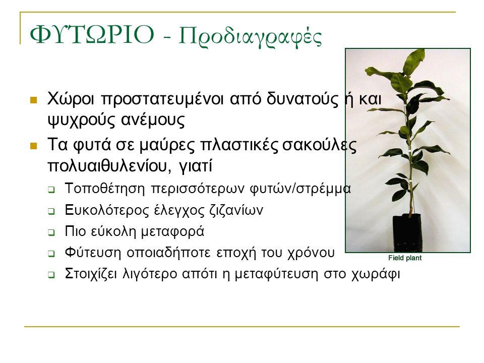 ΦΥΤΩΡΙΟ - Προδιαγραφές Χώροι προστατευμένοι από δυνατούς ή και ψυχρούς ανέμους Τα φυτά σε μαύρες πλαστικές σακούλες πολυαιθυλενίου, γιατί  Τοποθέτηση περισσότερων φυτών/στρέμμα  Ευκολότερος έλεγχος ζιζανίων  Πιο εύκολη μεταφορά  Φύτευση οποιαδήποτε εποχή του χρόνου  Στοιχίζει λιγότερο απότι η μεταφύτευση στο χωράφι