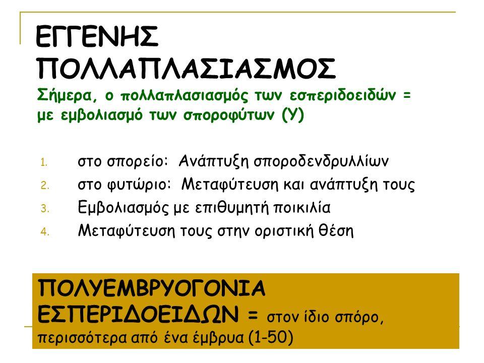 Σήμερα, ο πολλαπλασιασμός των εσπεριδοειδών = με εμβολιασμό των σποροφύτων (Υ) 1.