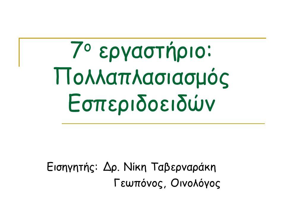 7 ο εργαστήριο: Πολλαπλασιασμός Εσπεριδοειδών Εισηγητής: Δρ. Νίκη Ταβερναράκη Γεωπόνος, Οινολόγος