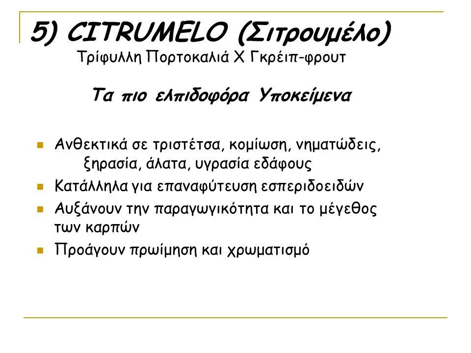 5) CITRUMELO (Σιτρουμέλο) Τρίφυλλη Πορτοκαλιά Χ Γκρέιπ-φρουτ Τα πιο ελπιδοφόρα Υποκείμενα Ανθεκτικά σε τριστέτσα, κομίωση, νηματώδεις, ξηρασία, άλατα, υγρασία εδάφους Κατάλληλα για επαναφύτευση εσπεριδοειδών Αυξάνουν την παραγωγικότητα και το μέγεθος των καρπών Προάγουν πρωίμηση και χρωματισμό