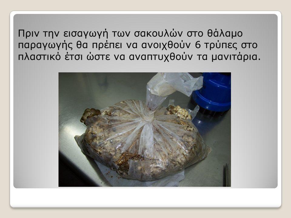 Πριν την εισαγωγή των σακουλών στο θάλαμο παραγωγής θα πρέπει να ανοιχθούν 6 τρύπες στο πλαστικό έτσι ώστε να αναπτυχθούν τα μανιτάρια.