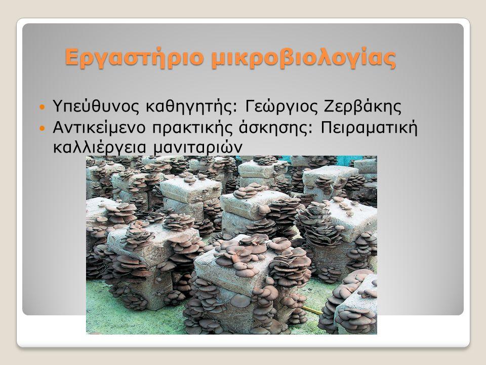 Εργαστήριο μικροβιολογίας Υπεύθυνος καθηγητής: Γεώργιος Ζερβάκης Αντικείμενο πρακτικής άσκησης: Πειραματική καλλιέργεια μανιταριών