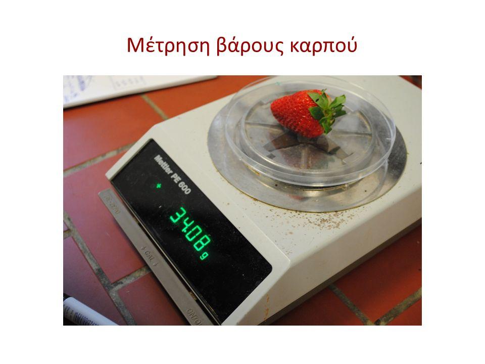 Μέτρηση βάρους καρπού