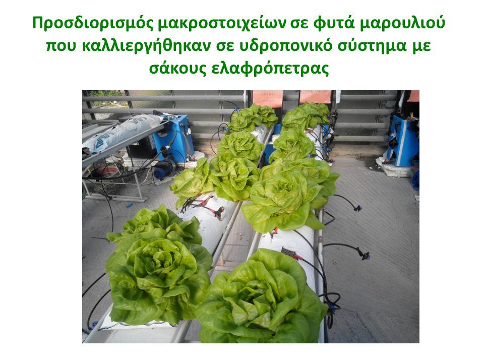 Προσδιορισμός μακροστοιχείων σε φυτά μαρουλιού που καλλιεργήθηκαν σε υδροπονικό σύστημα με σάκους ελαφρόπετρας