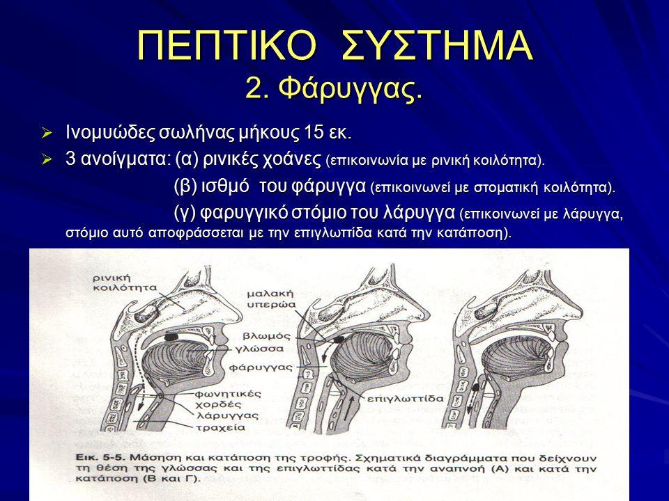 ΠΕΠΤΙΚΟ ΣΥΣΤΗΜΑ 2. Φάρυγγας.  Ινομυώδες σωλήνας μήκους 15 εκ.  3 ανοίγματα: (α) ρινικές χοάνες (επικοινωνία με ρινική κοιλότητα). (β) ισθμό του φάρυ