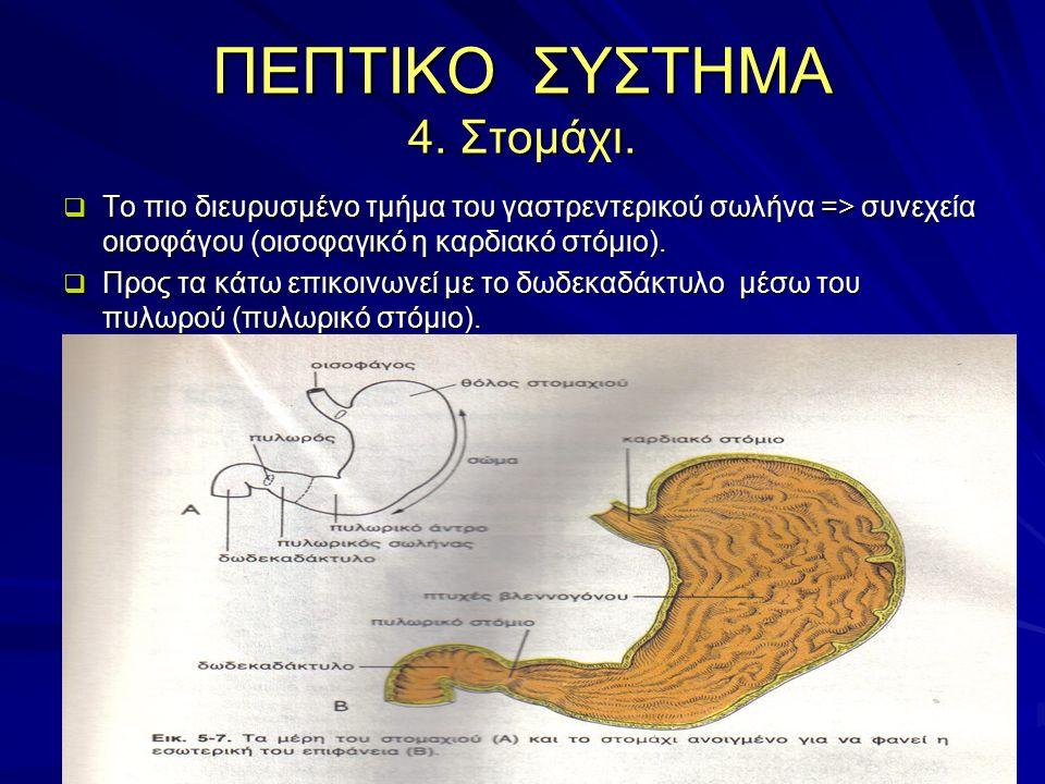 ΠΕΠΤΙΚΟ ΣΥΣΤΗΜΑ 4. Στομάχι.  Το πιο διευρυσμένο τμήμα του γαστρεντερικού σωλήνα => συνεχεία οισοφάγου (οισοφαγικό η καρδιακό στόμιο).  Προς τα κάτω