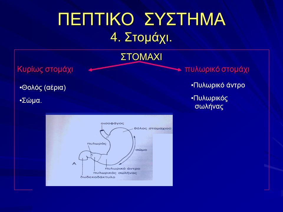 ΠΕΠΤΙΚΟ ΣΥΣΤΗΜΑ 4. Στομάχι. ΣΤΟΜΑΧΙ Κυρίως στομάχι πυλωρικό στομάχι Θολός (αέρια) Σώμα. Πυλωρικό άντρο Πυλωρικός σωλήνας