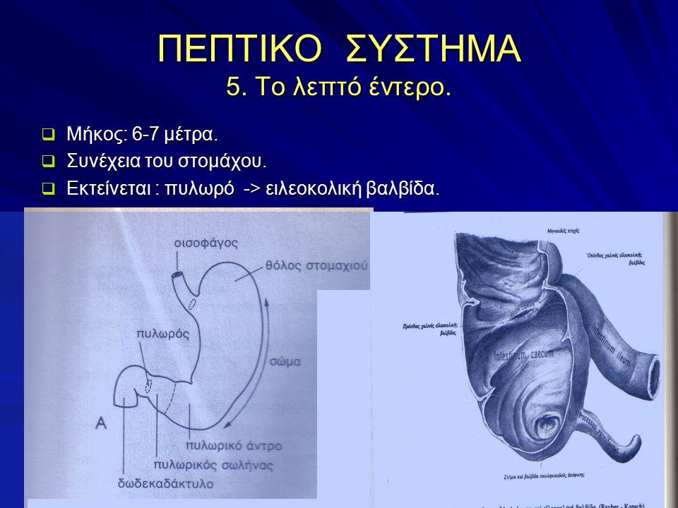 ΠΕΠΤΙΚΟ ΣΥΣΤΗΜΑ 5. Το λεπτό έντερο.  Μήκος: 6-7 μέτρα.  Συνέχεια του στομάχου.  Εκτείνεται : πυλωρό -> ειλεοκολική βαλβίδα.