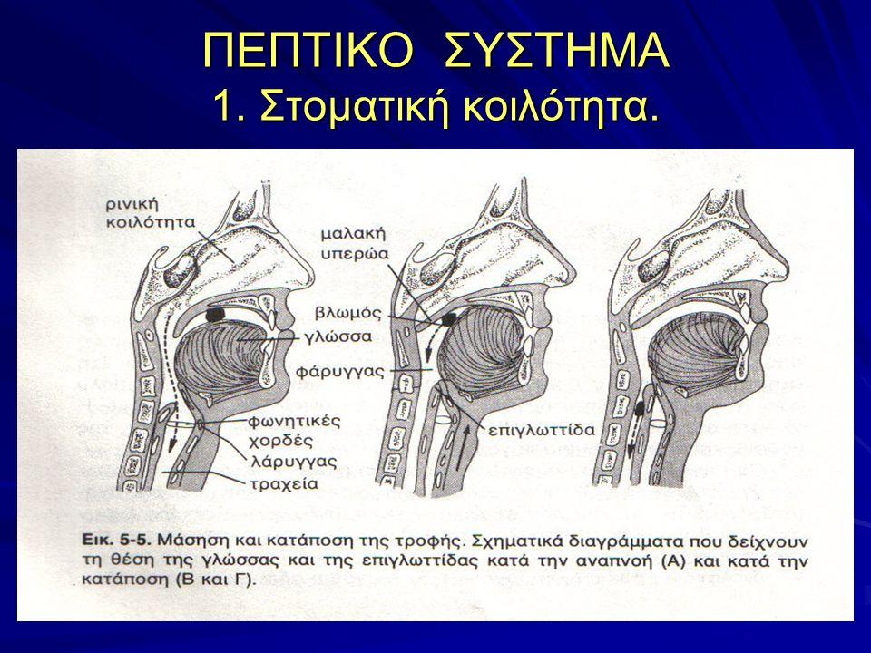 ΠΕΠΤΙΚΟ ΣΥΣΤΗΜΑ 4.Στομάχι. Τοιχώματα του στομάχου: 1.