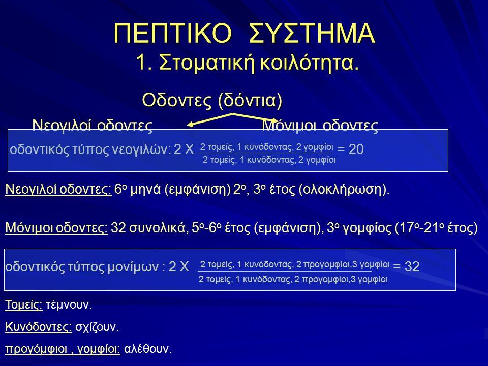 ΠΕΠΤΙΚΟ ΣΥΣΤΗΜΑ 1.Στοματική κοιλότητα. 1, 2. τομείς.