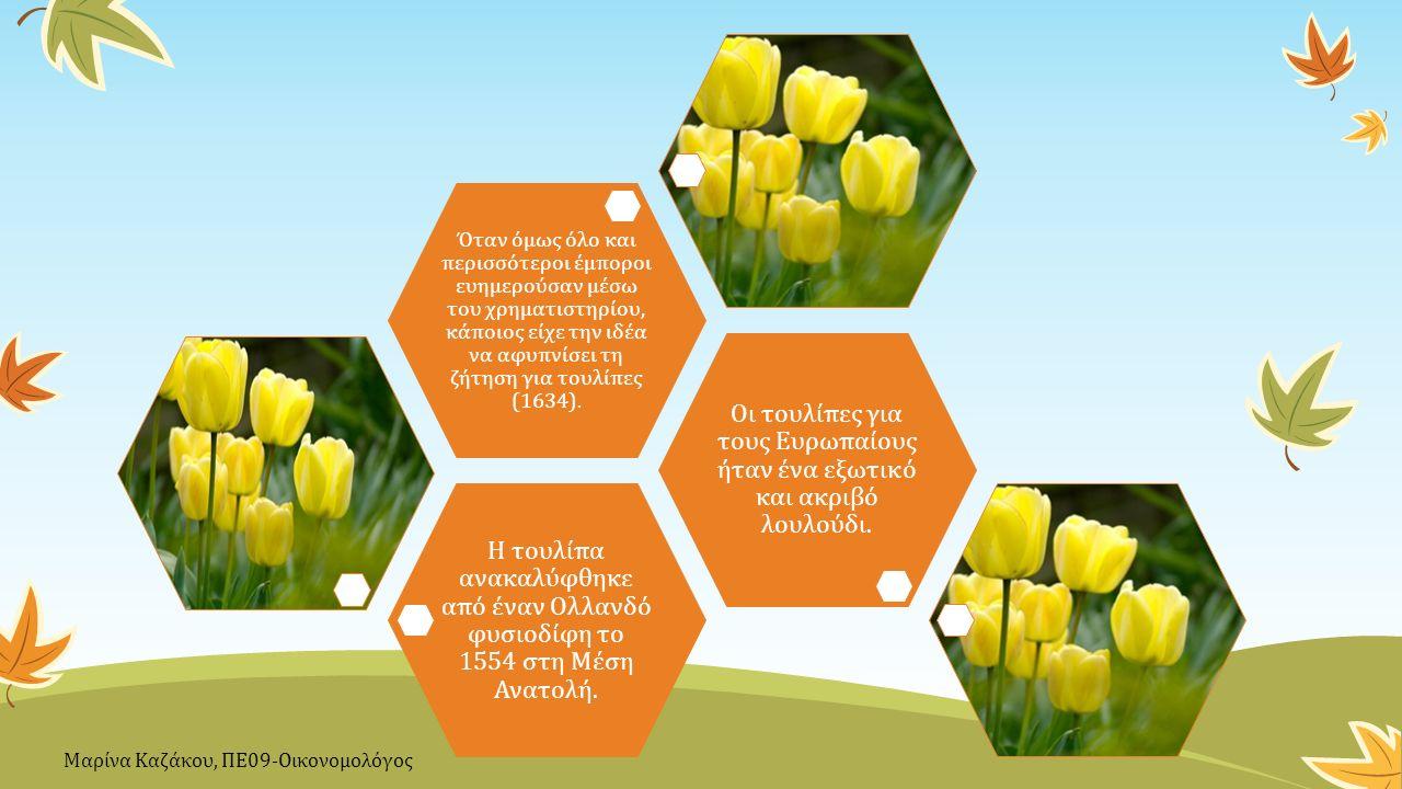 Η τουλίπα ανακαλύφθηκε από έναν Ολλανδό φυσιοδίφη το 1554 στη Μέση Ανατολή. Οι τουλίπες για τους Ευρωπαίους ήταν ένα εξωτικό και ακριβό λουλούδι. Όταν