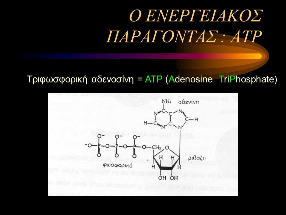 Ο ΕΝΕΡΓΕΙΑΚΟΣ ΠΑΡΑΓΟΝΤΑΣ : ΑΤΡ Τριφωσφορική αδενοσίνη = ΑΤΡ (Αdenosine TriPhosphate)