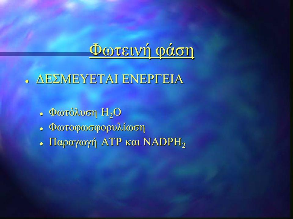 Φωτεινή φάση l ΔΕΣΜΕΥΕΤΑΙ ΕΝΕΡΓΕΙΑ l Φωτόλυση Η 2 Ο l Φωτοφωσφορυλίωση l Παραγωγή ΑΤΡ και NADPH 2