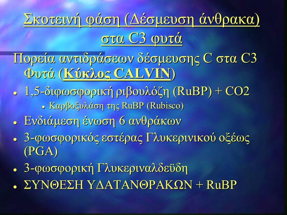 Σκοτεινή φάση (Δέσμευση άνθρακα) στα C3 φυτά Πορεία αντιδράσεων δέσμευσης C στα C3 Φυτά (Κύκλος CALVIN) l 1,5-διφωσφορική ριβουλόζη (RuBP) + CO2 l Kαρβοξυλάση της RuBP (Rubisco) l Ενδιάμεση ένωση 6 ανθράκων l 3-φωσφορικός εστέρας Γλυκερινικού οξέως (PGA) l 3-φωσφορική Γλυκεριναλδεϋδη l ΣΥΝΘΕΣΗ ΥΔΑΤΑΝΘΡΑΚΩΝ + RuBP