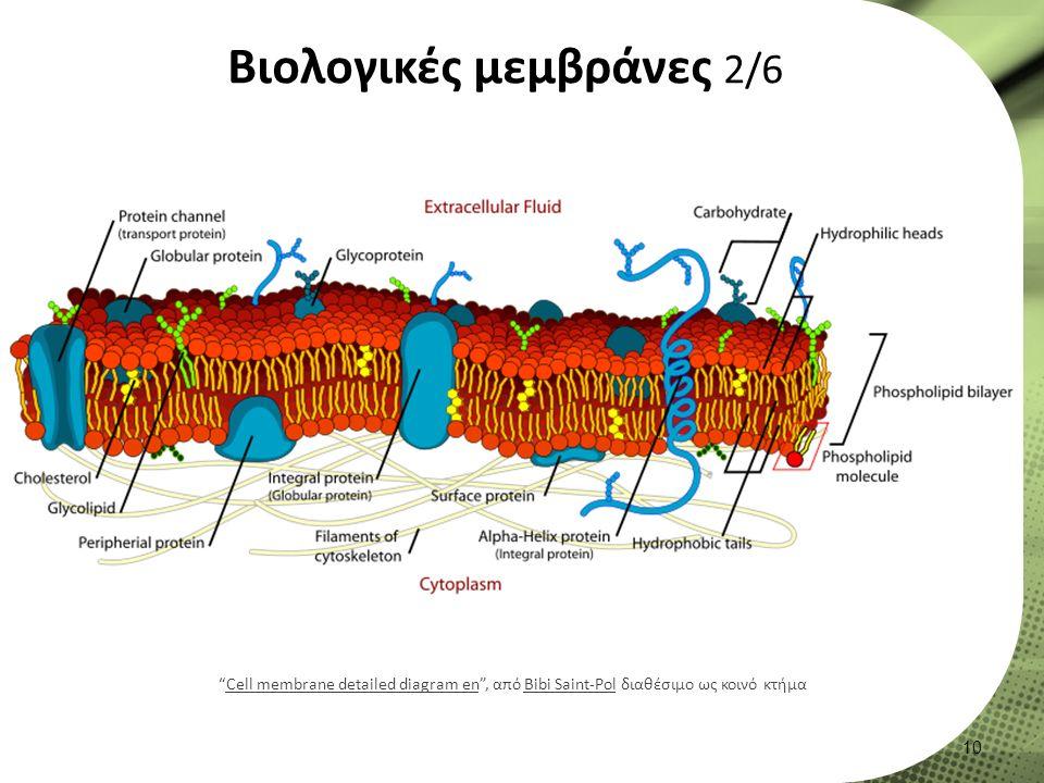 Βιολογικές μεμβράνες 2/6 10 Cell membrane detailed diagram en , από Bibi Saint-Pol διαθέσιμο ως κοινό κτήμαCell membrane detailed diagram enBibi Saint-Pol