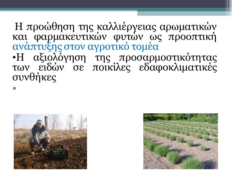 Η παραγωγή ξηρής δρόγης και αιθέριων ελαίων Η μεταφορά τεχνογνωσίας Η συνεργασία με φορείς που δραστηριοποιούνται στο ίδιο θεματικό πεδίο.