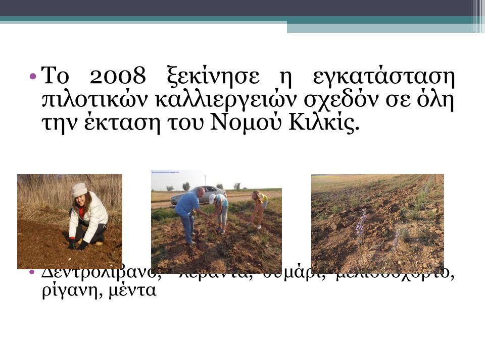 Το 2008 ξεκίνησε η εγκατάσταση πιλοτικών καλλιεργειών σχεδόν σε όλη την έκταση του Νομού Κιλκίς.