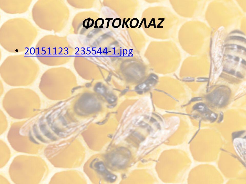 ΣΥΝΕΝΤΕΥΞΗ ΣΥΝΕΝΤΕΥΞΗ.docx η οποία πραγματοποιήθηκε από έναν έμπειρο μελισσοκόμο της περιοχής μας.