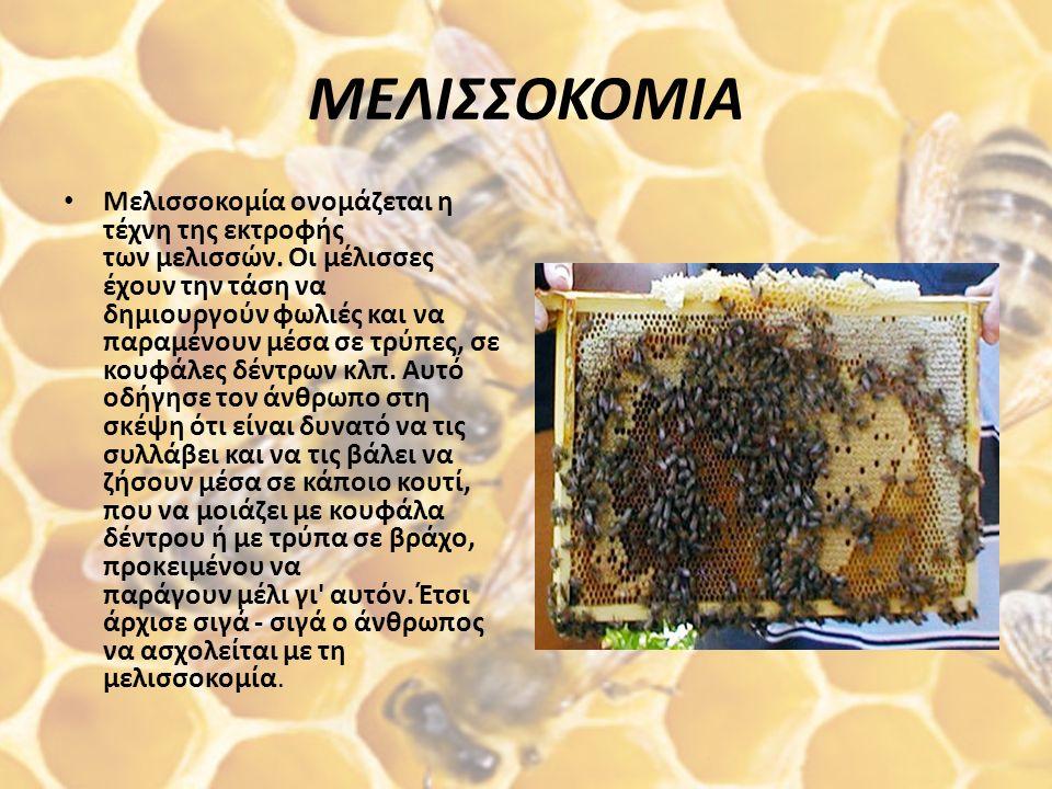 ΜΕΛΙΣΣΟΚΟΜΙΑ Μελισσοκομία ονομάζεται η τέχνη της εκτροφής των μελισσών.
