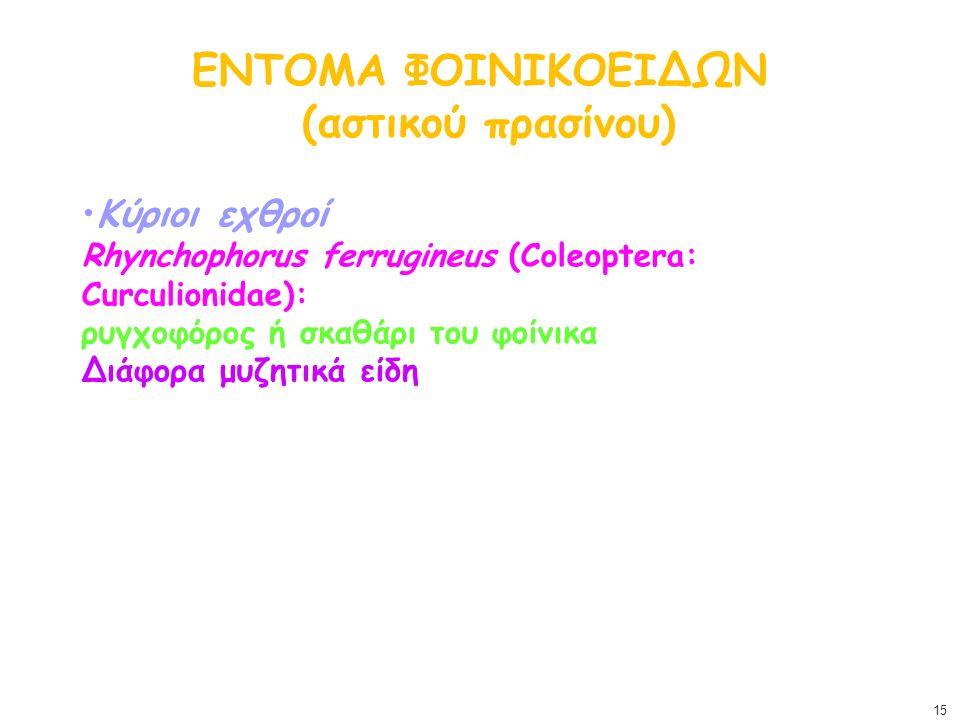 ΕΝΤΟΜΑ ΦΟΙΝΙΚΟΕΙΔΩΝ (αστικού πρασίνου) Κύριοι εχθροί Rhynchophorus ferrugineus (Coleoptera: Curculionidae): ρυγχοφόρος ή σκαθάρι του φοίνικα Διάφορα μ