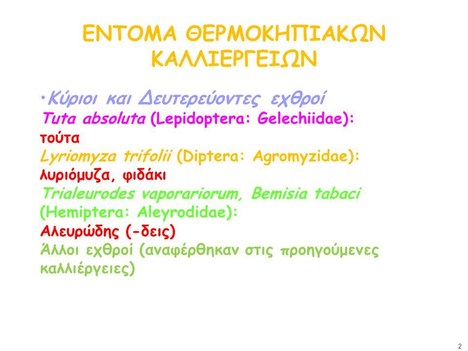 ΕΝΤΟΜΑ ΘΕΡΜΟΚΗΠΙΑΚΩΝ ΚΑΛΛΙΕΡΓΕΙΩΝ Κύριοι και Δευτερεύοντες εχθροί Tuta absoluta (Lepidoptera: Gelechiidae): τούτα Lyriomyza trifolii (Diptera: Agromyz