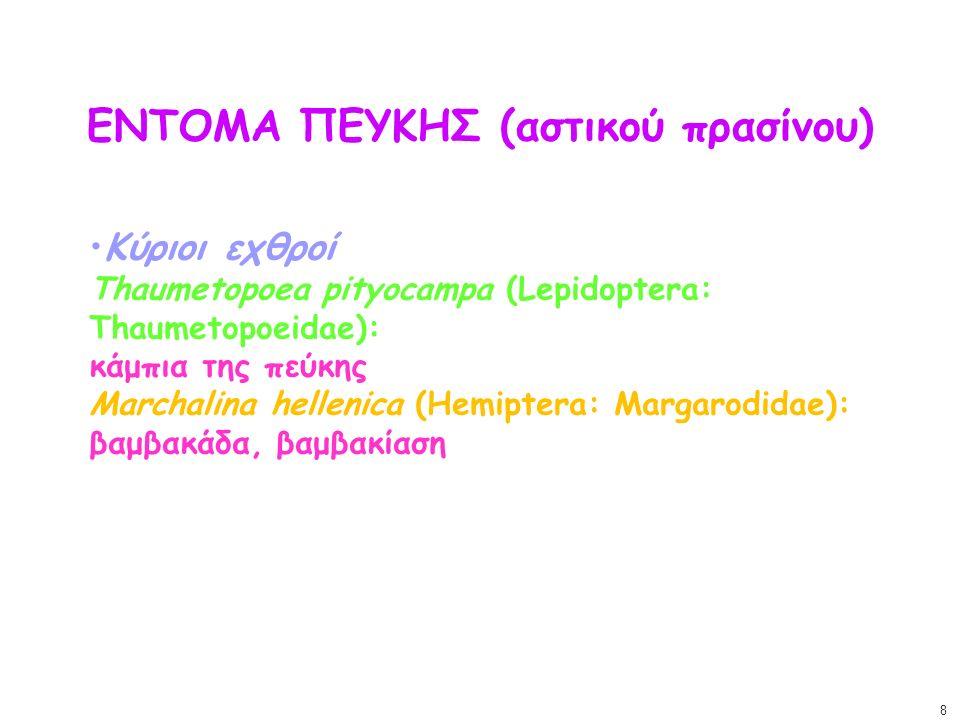 ΕΝΤΟΜΑ ΠΕΥΚΗΣ (αστικού πρασίνου) Κύριοι εχθροί Thaumetopoea pityocampa (Lepidoptera: Thaumetopoeidae): κάμπια της πεύκης Marchalina hellenica (Hemipte