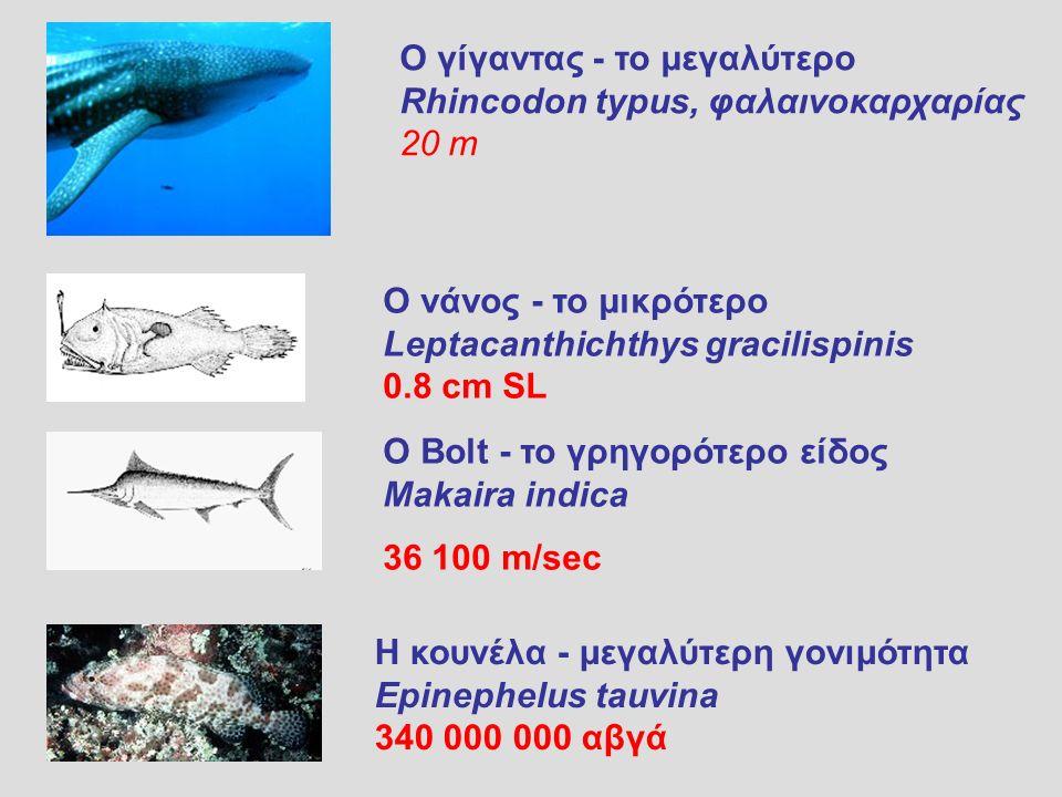 Ο νάνος - το μικρότερο Leptacanthichthys gracilispinis 0.8 cm SL Ο Bolt - το γρηγορότερο είδος Makaira indica 36 100 m/sec Η κουνέλα - μεγαλύτερη γονιμότητα Epinephelus tauvina 340 000 000 αβγά Ο γίγαντας - το μεγαλύτερο Rhincodon typus, φαλαινοκαρχαρίας 20 m