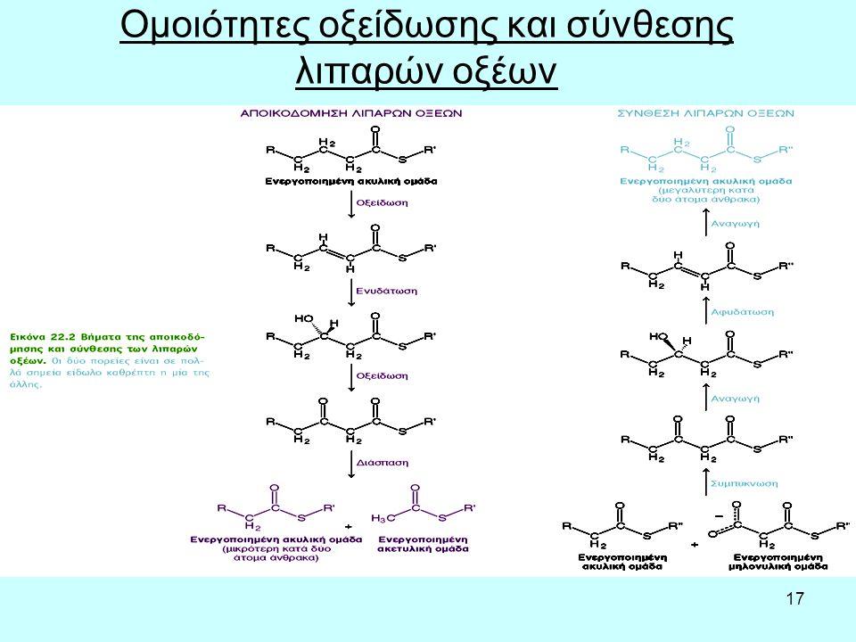 17 Ομοιότητες οξείδωσης και σύνθεσης λιπαρών οξέων