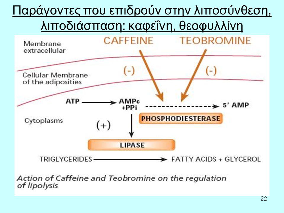 22 Παράγοντες που επιδρούν στην λιποσύνθεση, λιποδιάσπαση: καφεΐνη, θεοφυλλίνη