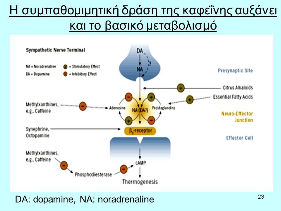 23 Η συμπαθομιμητική δράση της καφεΐνης αυξάνει και το βασικό μεταβολισμό DA: dopamine, NA: noradrenaline