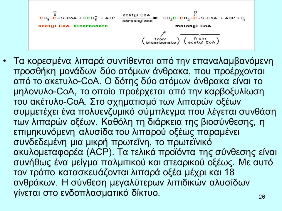 26 Τα κορεσμένα λιπαρά συντίθενται από την επαναλαμβανόμενη προσθήκη μονάδων δύο ατόμων άνθρακα, που προέρχονται από το ακετυλο-CoA. Ο δότης δύο ατόμω