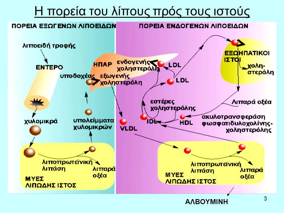 14 Ασιτία, διαβήτης, κετονοσώματα-2