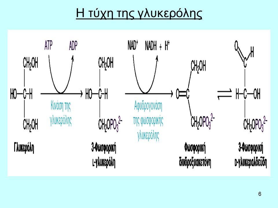 7 Μεταφορά των λιπαρών οξέων στα μιτοχόνδρια
