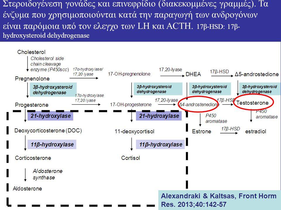Στεροιδογένεση γονάδες και επινεφρίδιο (διακεκομμένες γραμμές).
