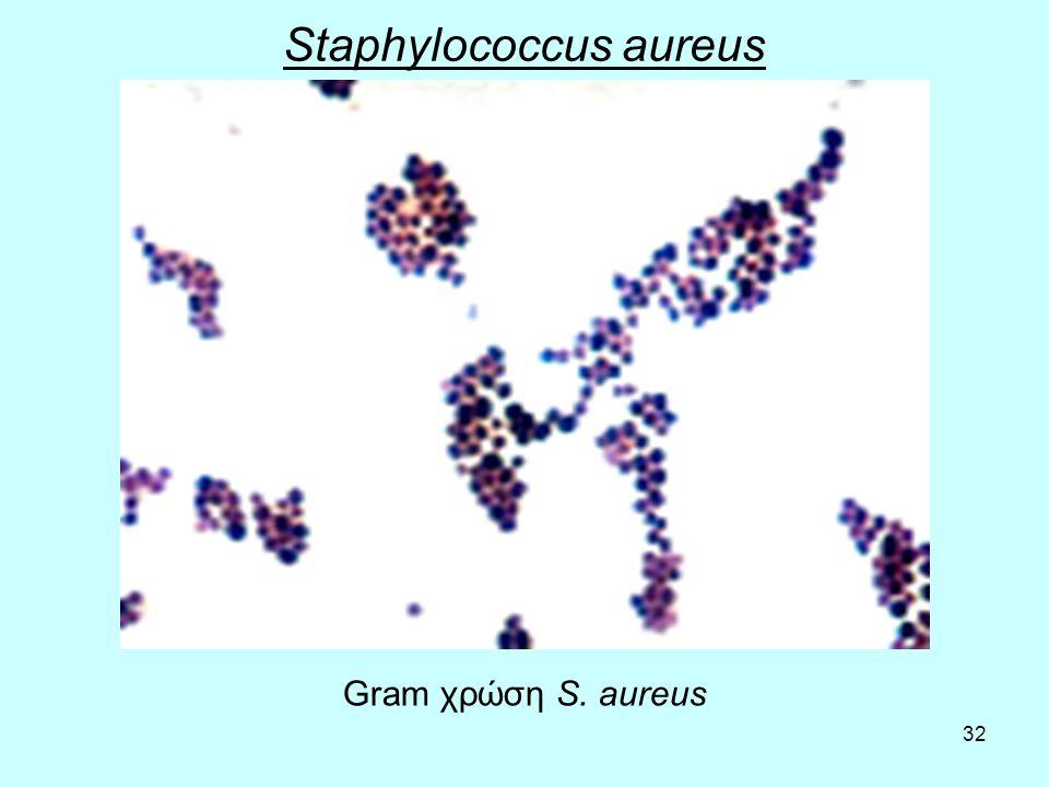 32 Staphylococcus aureus Gram χρώση S. aureus